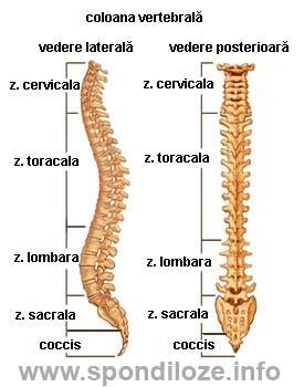Medicament. hernia spinarii