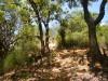 Hiking 2012 June 16 - 頁 2 418f07433928127