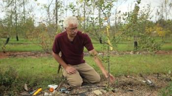Пермакультурный сад: превосходящий органический (2014) HDTV - Видеокурс